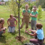 tree_planting2